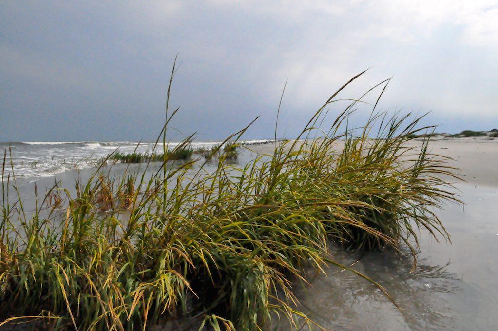 Edisto-0577_close-up-of-seagrass