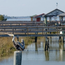 Edisto-3502_view-through-docks