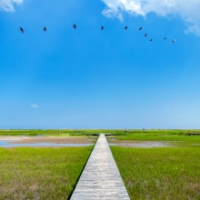 Edisto-5007_View-over-marsh