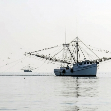 Edisto-8375_shrimp-boat