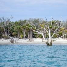 Edisto-8818_botany-bay-beach