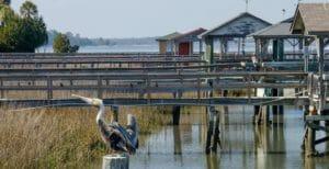 Edisto Island Docks