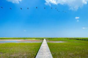 Edisto Island Marsh