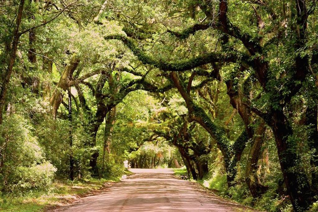 nature trails edisto