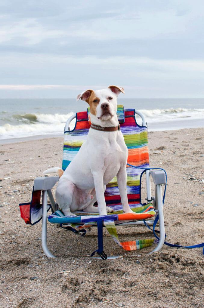 Dog-Friendly Edisto Beach Getaway