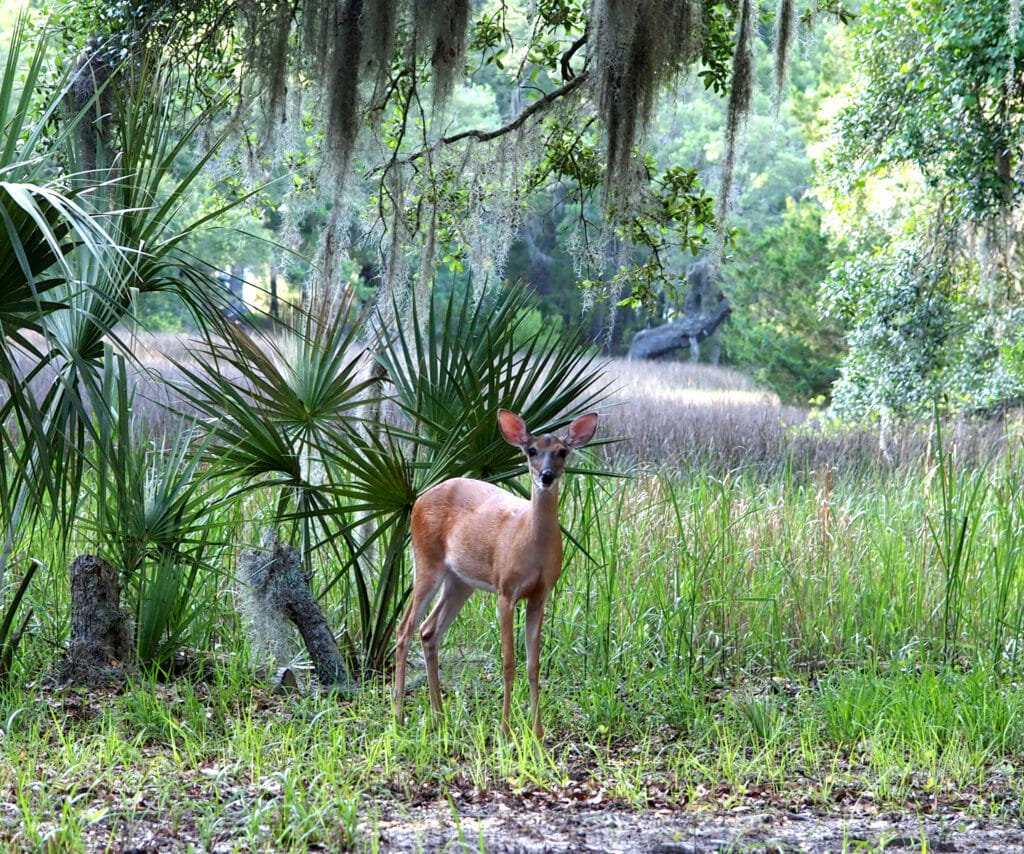 Nature trails to hike in Edisto